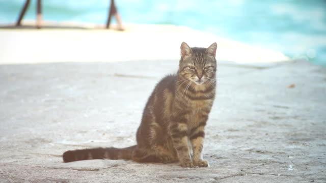 Faul streunende Katze