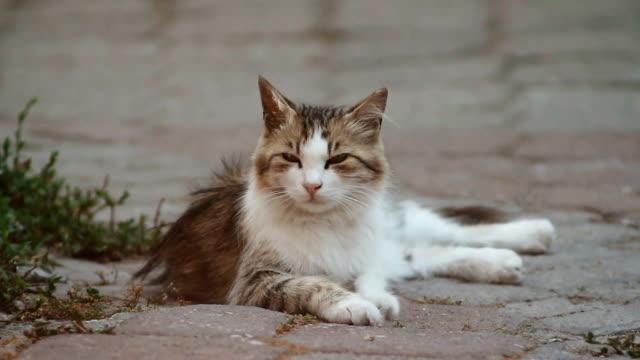 lazy stray cat - undomesticated cat stock videos & royalty-free footage