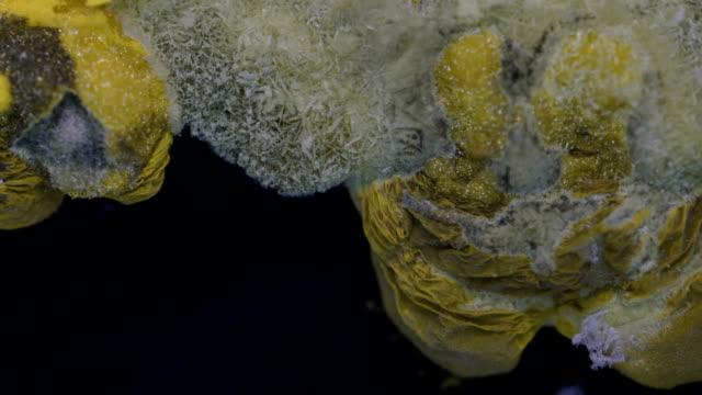 vídeos y material grabado en eventos de stock de lead iodide precipitation under light microscopy - polarizador