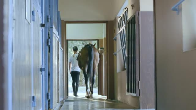 stockvideo's en b-roll-footage met ds leidt de baai paard uit de stal - alleen één mid volwassen vrouw