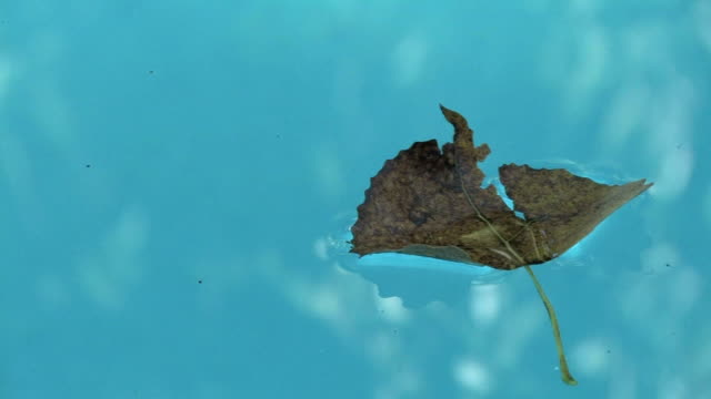leaf 1 - kürzer als 10 sekunden stock-videos und b-roll-filmmaterial