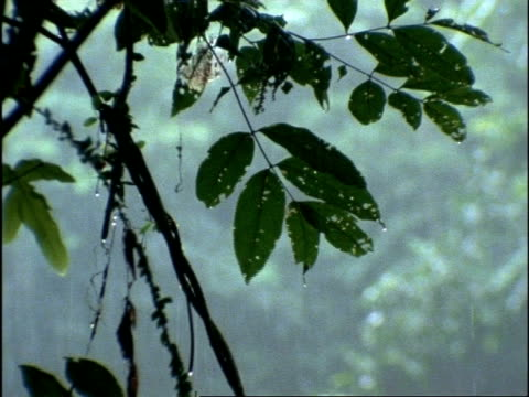 mcu leaf against pouring rain, rainforest, costa rica - monsoon stock videos and b-roll footage