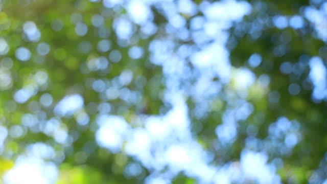 stockvideo's en b-roll-footage met blad bokeh vervagen met zon piek door bladeren - bosje