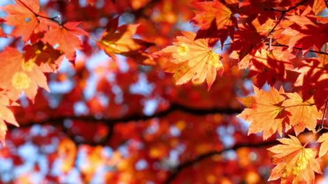 vidéos et rushes de feuille changé de couleur à l'heure d'automne - motivation