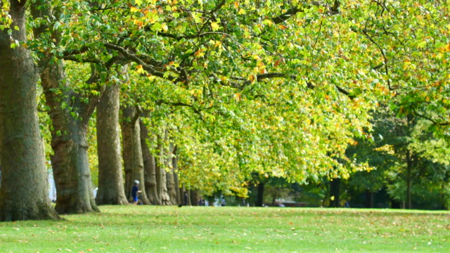 vídeos de stock e filmes b-roll de 4k leaf fall in autumn, hyde park, london - public park