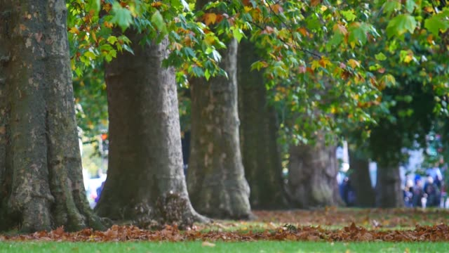 4K Leaf fall in autumn, Hyde park, London
