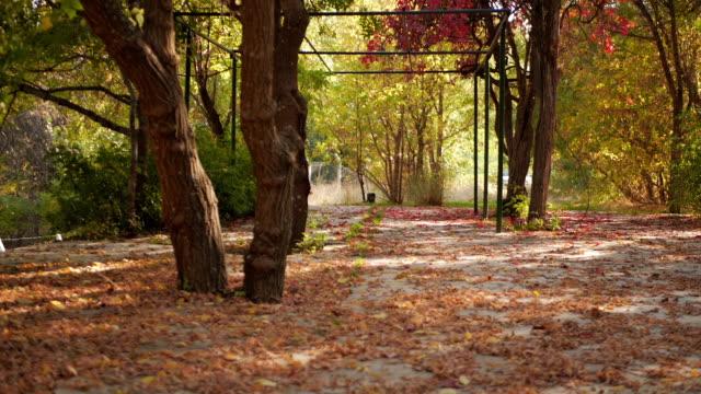vidéos et rushes de chute de feuille dans le parc de ville d'automne. beau fond naturel - végétation verdoyante