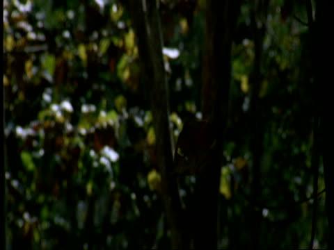 ms leaf falling in forest, high speed, western ghats, india - hohe aufnahmegeschwindigkeit stock-videos und b-roll-filmmaterial