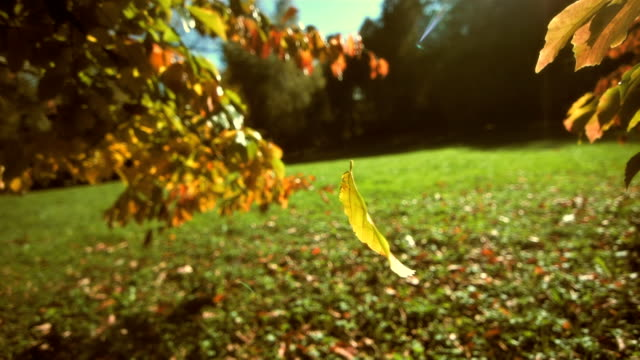 leaf falling off a tree (super slow motion) - falling stock videos and b-roll footage
