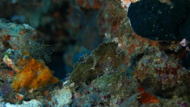 Blatt Fisch verstecken in Rock im Korallenriff Unterwasser