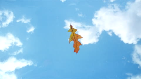 stockvideo's en b-roll-footage met la cu leaf floating on air and landing on the surface of the water - autumn
