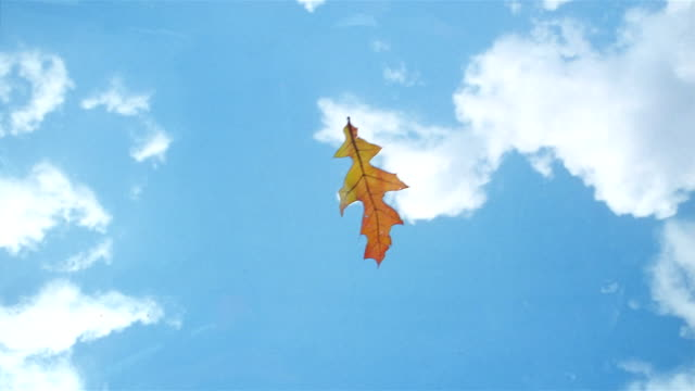 stockvideo's en b-roll-footage met la cu leaf floating on air and landing on the surface of the water - herfst