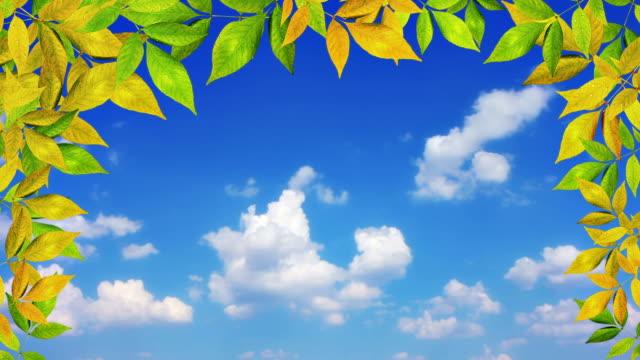 Leaf frame and sky
