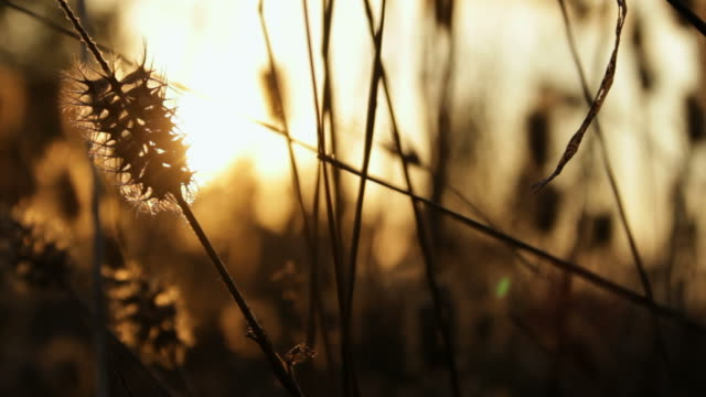 leaf in autumn, in italy - marrone video stock e b–roll