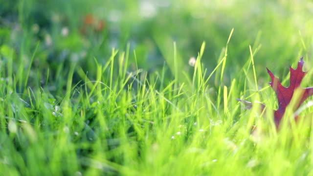 Leaf on fresh green grass