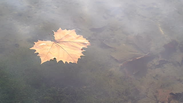 leaf on water - floating on water stock videos & royalty-free footage