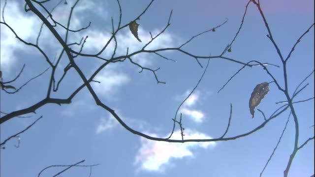 A leaf sways in the wind on bare tree branches.
