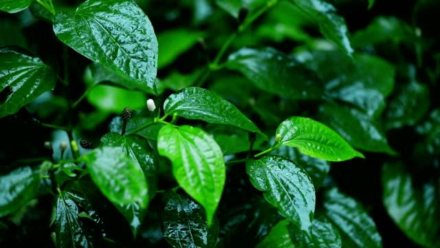 雨の水の滴の葉 - 濡れている点の映像素材/bロール