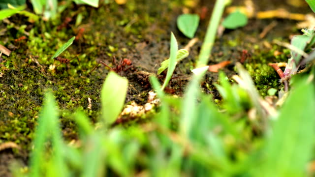 leafcutter ants from costa rica - tropical rainforest stock videos & royalty-free footage