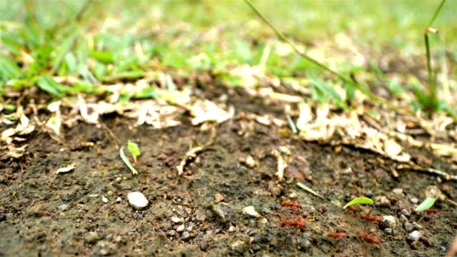 blattschneider ameisen aus costa rica - ameisen stock-videos und b-roll-filmmaterial