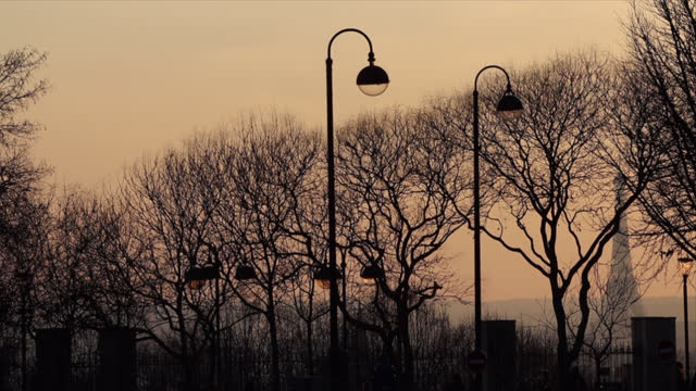 leafless tree with eiffel tower at sunset - bare tree stock videos & royalty-free footage