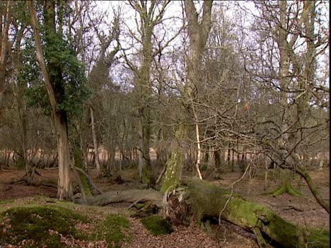 vídeos de stock, filmes e b-roll de leafless trees in woodland uk - trepadeira