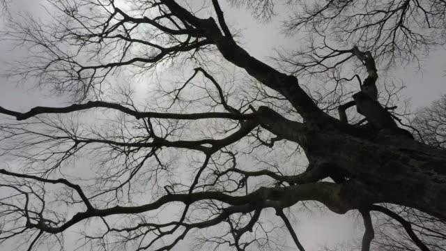 vídeos y material grabado en eventos de stock de leafless árboles - rama parte de planta