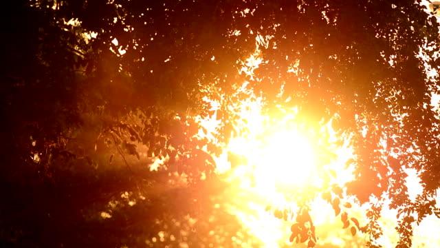 Leafs bij zonsondergang