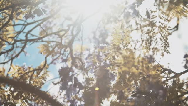 vídeos y material grabado en eventos de stock de hojas a la luz del sol - rama parte de planta