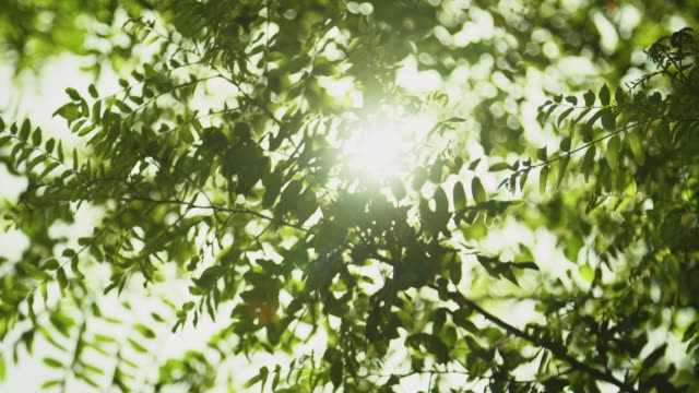 leafs in sunlight - light natural phenomenon stock videos & royalty-free footage