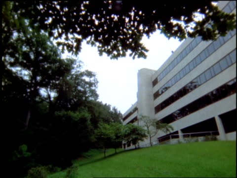 stockvideo's en b-roll-footage met leafy branches frame an office building. - plantdeel