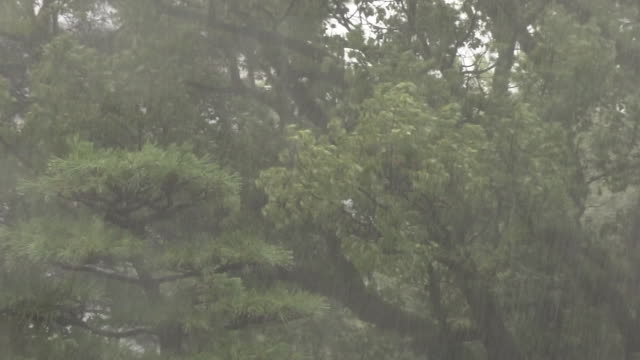 leafy branches swaying by rainstorm, kochi, japan - raining cats and dogs stock videos & royalty-free footage