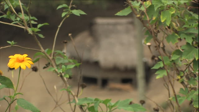 vídeos de stock e filmes b-roll de leafy plants tremble in a breeze near a house with a thatched roof. - telhado de palha