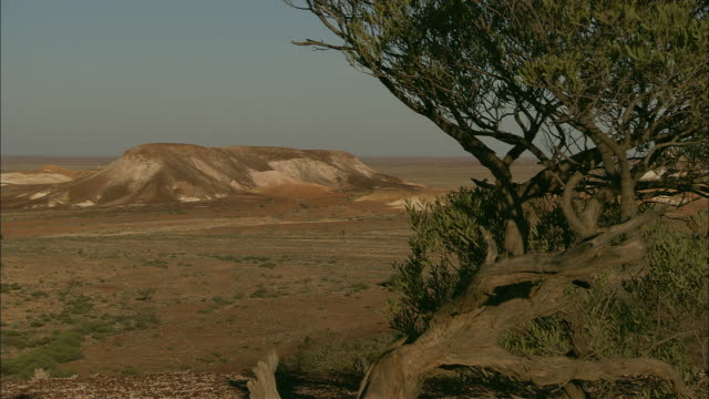 a leafy tree frames the dry plateau of coober pedy in the australian outback. - coober pedy stock videos & royalty-free footage