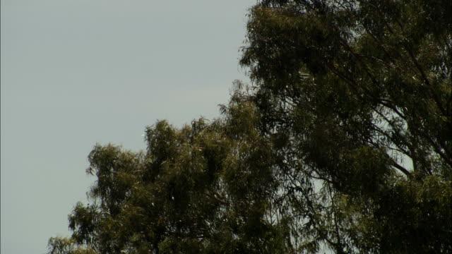 vídeos y material grabado en eventos de stock de leafy tree limbs sway in a breeze. - rama parte de planta