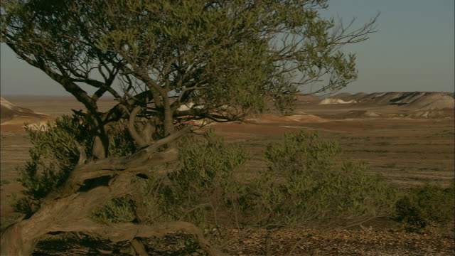 leafy trees frame an outback plateau in coober pedy. - coober pedy stock videos & royalty-free footage