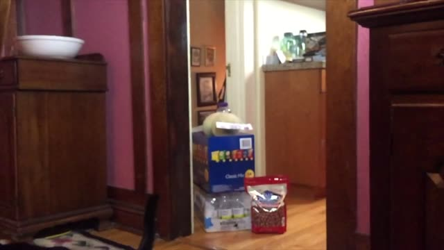 leapfrog the cat flawlessly jumps over a few items that were bought in bulk. how cool is that? - leapfrog stock videos & royalty-free footage