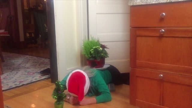 leapfrog the cat jumps over a crouched person with a centerpiece in this epic slow motion clip. awesome! - leapfrog stock videos & royalty-free footage