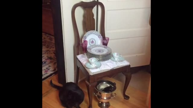 leapfrog the cat leaps over some fine china in this awesome slow motion footage. so cool! - leapfrog stock videos & royalty-free footage