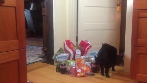 vídeos de stock, filmes e b-roll de leapfrog the cat must be on a sugar high! check out this snack attack jumping action! - jogo de carniça
