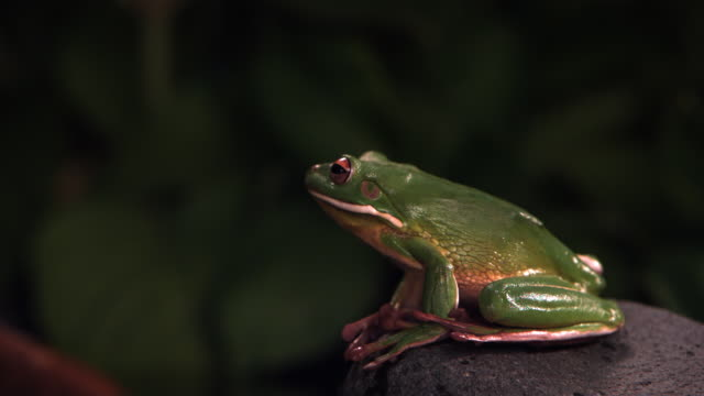 leaping frog - frog stock videos and b-roll footage