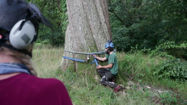 ツリーエキスパートから学ぶ - 木材産業点の映像素材/bロール