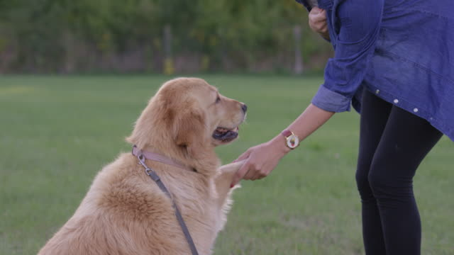 learning obedience - handshake stock videos & royalty-free footage