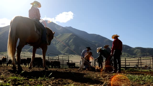 learning the ropes: young cowboy learns farm life on ranch - rancher stock videos & royalty-free footage