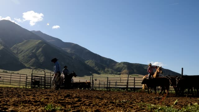 learning the ropes: young cowboy learns farm life on ranch - ranch stock videos & royalty-free footage