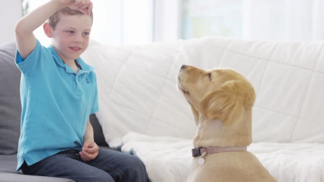 learning to speak - golden retriever stock videos & royalty-free footage