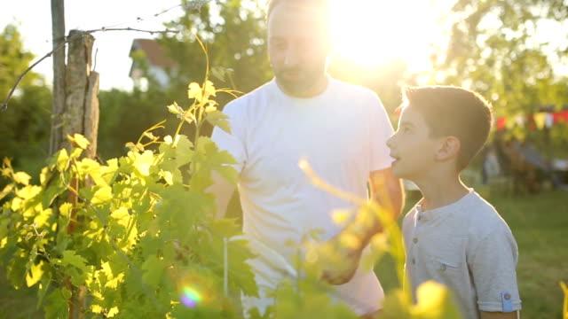vidéos et rushes de apprendre ensemble - jardin de la maison