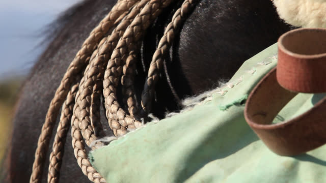 leather straps on side of horse saddle - saddle stock videos & royalty-free footage