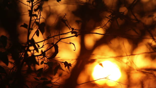 leaves and branches at sunset, last artistically shot out of focus - last stock videos & royalty-free footage