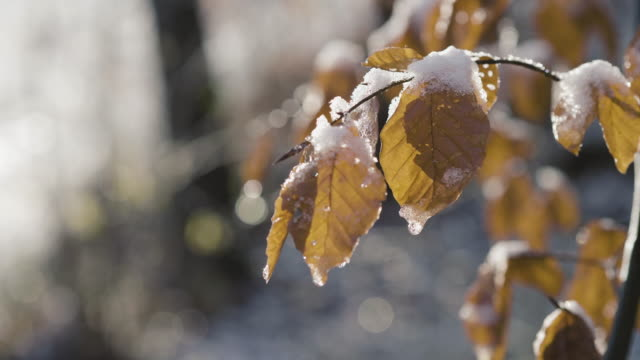 leaves and branches covered in snow - leaf stock videos & royalty-free footage
